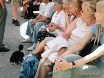 Cat, Montserrat, Spain 2003