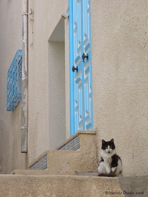 Cat, Sousse, Tunisia, 2006