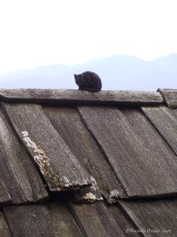 Cat on the roof, Sapa, Vietnam 2005