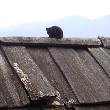 Cat on the roof, Sapa, Vietnam 2005