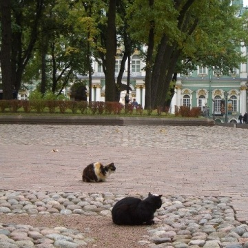 Cats in the park, St Petersburg, Russia 2005