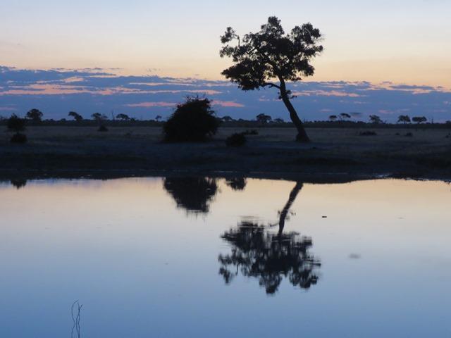 Light and Reflection - Tree at dusk, Savuti, Botswana, May 2016