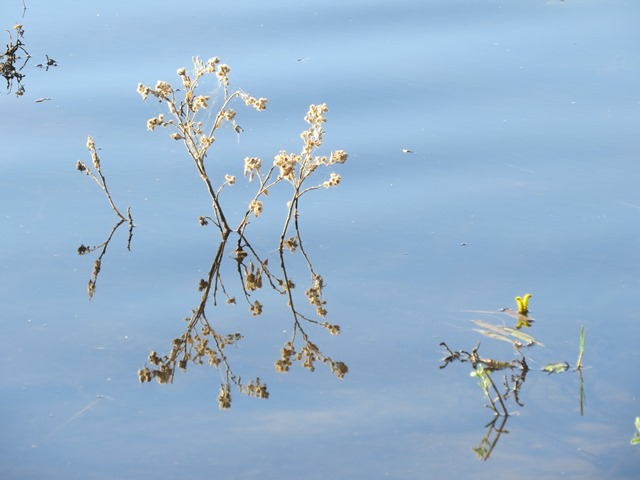 Light and Reflection - Flowers in the river, Chobe, Botswana, May 2016