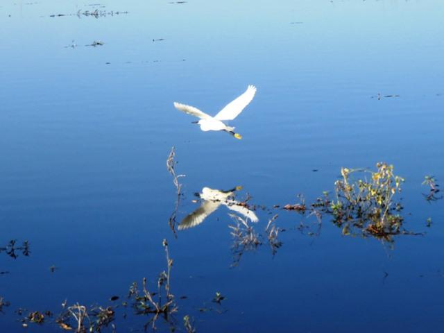 Light and Reflection - Little Egret, Chobe, Botswana, May 2016