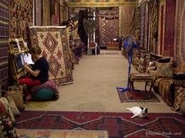 Cat in carpet shop, Selçuk, Turkey 2008