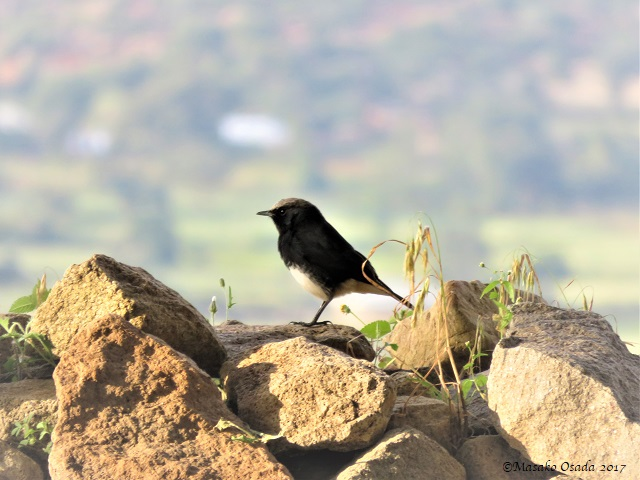 Bird at Tombs of Kaleb and Gabre Meskel