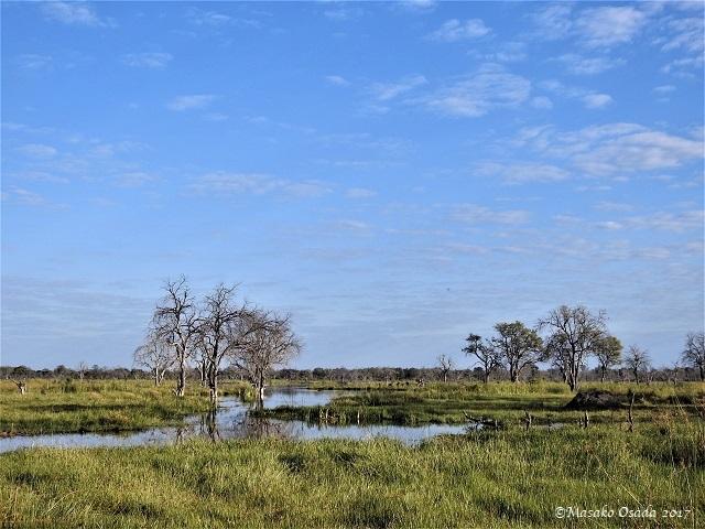Daytime, Khwai, Botswana, June 2017