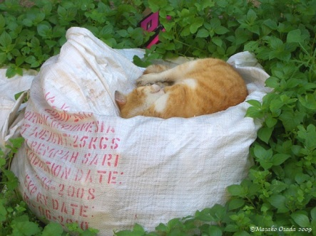 Cat on a sack, Athens 2009