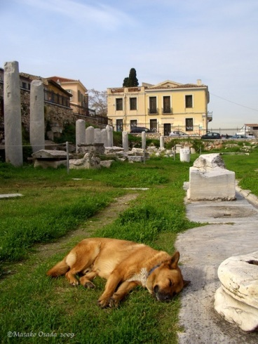 Dog napping in the Roman Forum, Athens, Greece 2009