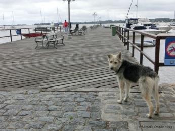 Moppy dog, Colonia del Sacramento, Uruguay 2013