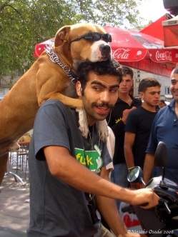 Cool dog on a bike with his human, Istanbul, Turkey
