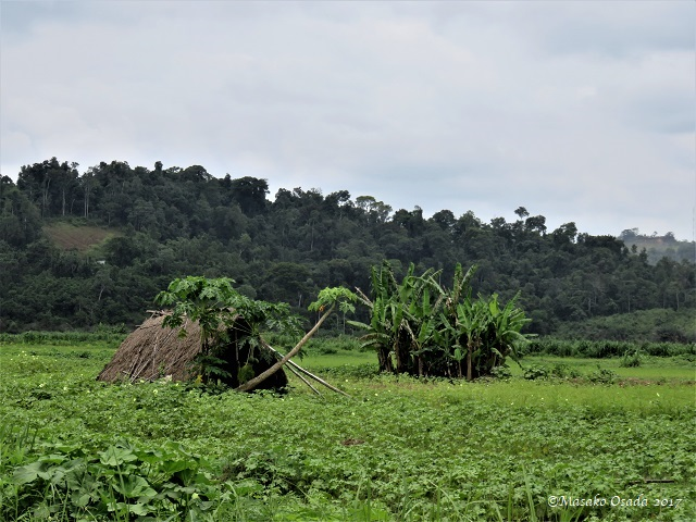 Farm, Bong, Liberia, April 2017
