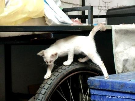 Kitten in the alley, Bangkok 2012