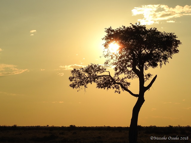 Sunset, Savuti, Botswana, May 2018