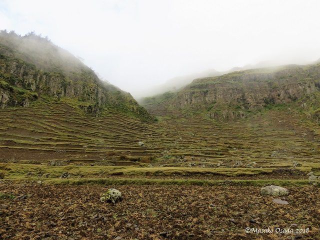 Terraced fields. Egora village, GCCA, Ethiopia, November 2018