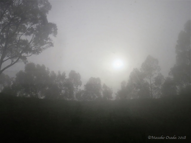 Sun over misty forest. On the way to Tarmaber, Ethiopia, November 2018