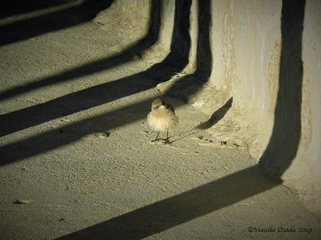 Tiny bird, Guassa, Ethiopia, January 2019