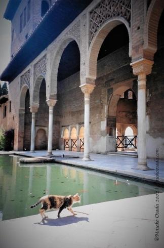 Cat, Generalife, Granada, June 2002