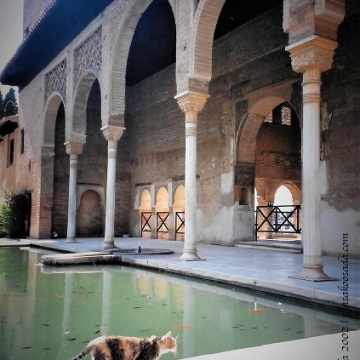 Cat, Generalife, Granada, June 2002