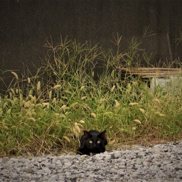 Cat on road side, Fujinomiya, Shizuoka, September 2004