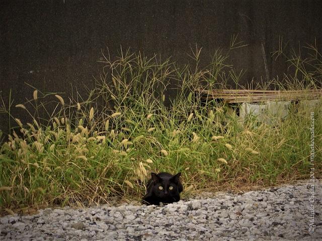 Cat on road side, Fujinomiya, Shizuoka, September 2004