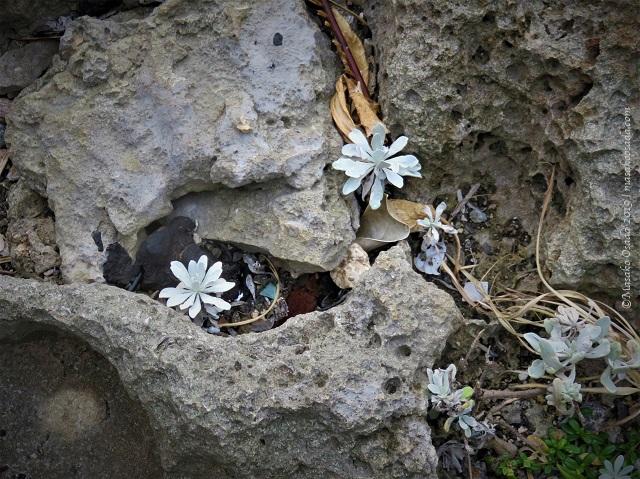 Plants on rocky beach, Kumejima, Okinawa, November 2019