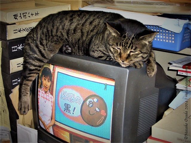 Cat sleeping on TV sent in secondhand bookstore