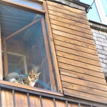 Cats around the world, Saint Petersburg, Russian 2005