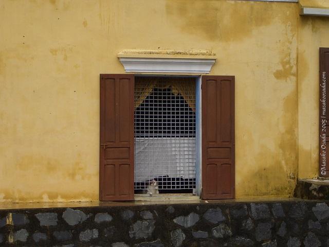 Dogs around the world, Hoi An, Vietnam