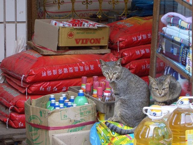 Shopkeepers, Sapa, Vietnam