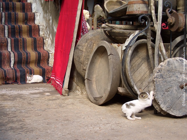 Two kittens at a junk shop, Djerba, Tunisia